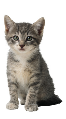 Kitten | Sheknows.com