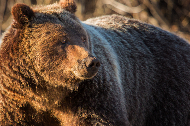 Grizzly bear shatters glass zoo enclosure