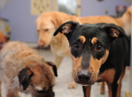 Group of rescue dogs