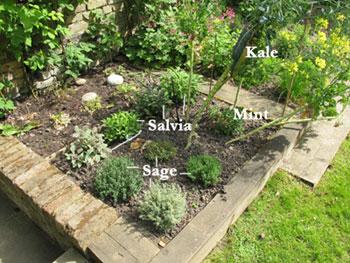GOOP garden