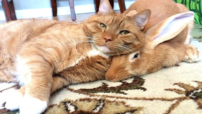 This ginger-haired rabbit and cat duo is our favorite fall friendship