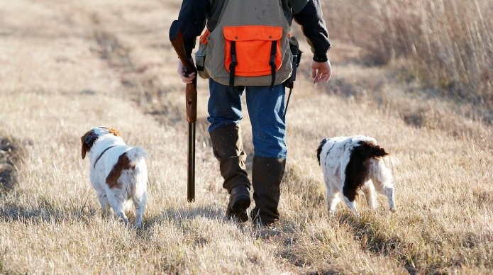 Top 10 best hunting dogs that