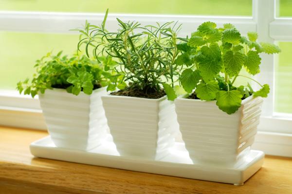 herbs in window garden