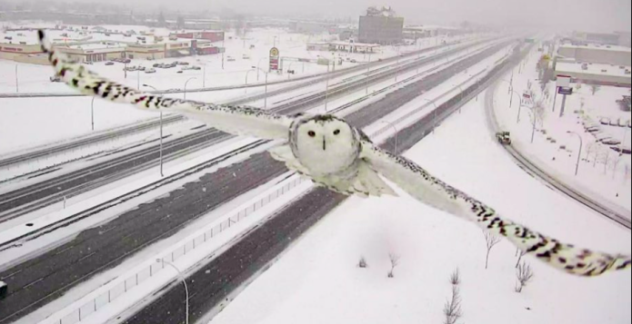 Traffic camera snaps breathtaking shots of