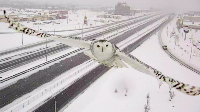 Traffic camera snaps breathtaking shots of