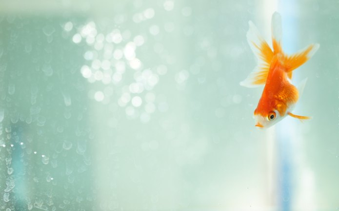 6 Easiest Pet Fish to Keep