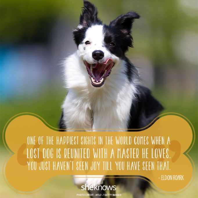 """""""One of the happiest sights in the world comes when a lost dog is reunited with a master he loves. You just haven't seen joy till you have seen that. —Eldon Roark"""