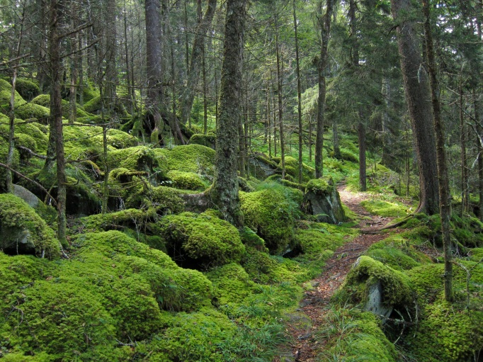 A hiking path in Great Smoky Mountains National Park