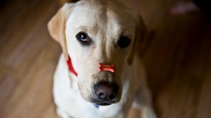 I became an expert dog trainer