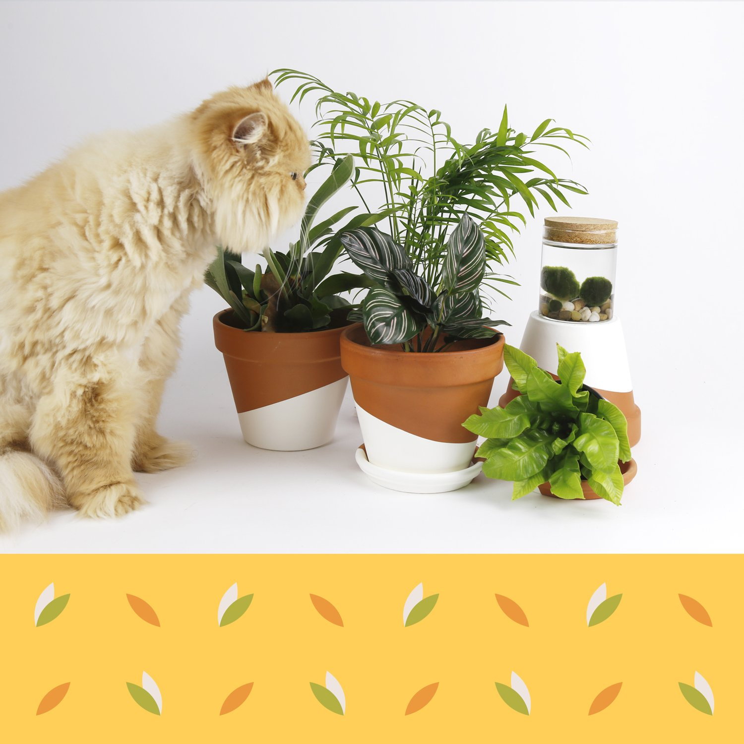 Cat approaching several plants