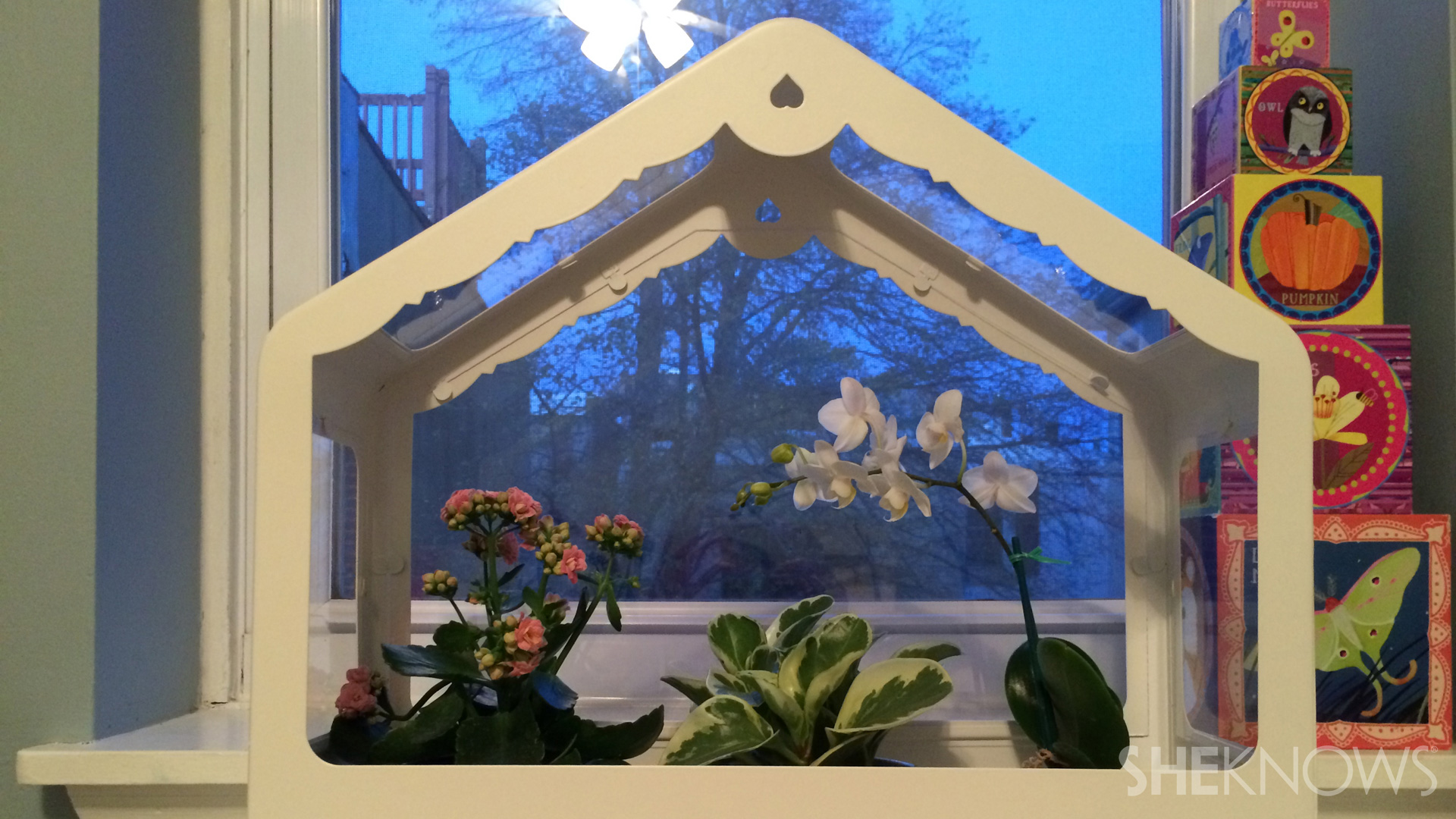 Houseplant house