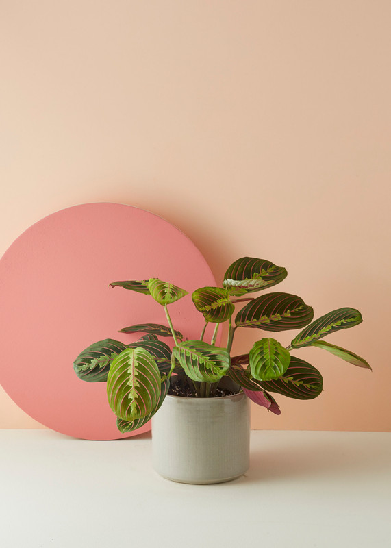 Patterned Plants to Spruce Up Your Winter | Patterned Plants