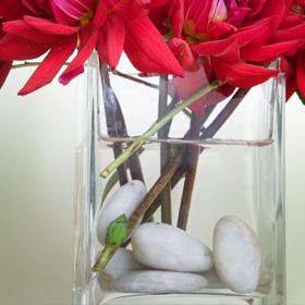 Pebbles in vase