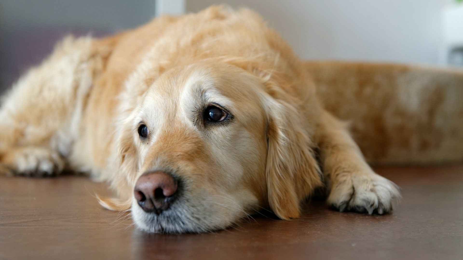 Divorce can have a devastating effect on your pets: What you need to know SheKnows