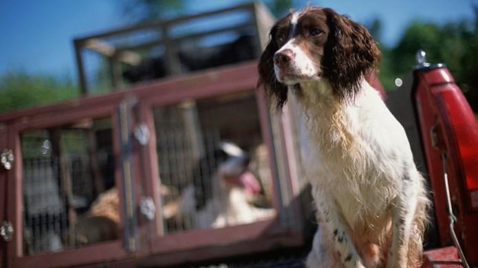 15 Dog breeds that make great