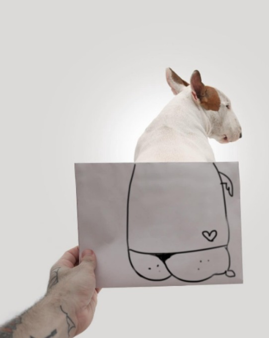 Jimmy the bull terrier helped owner get over breakup