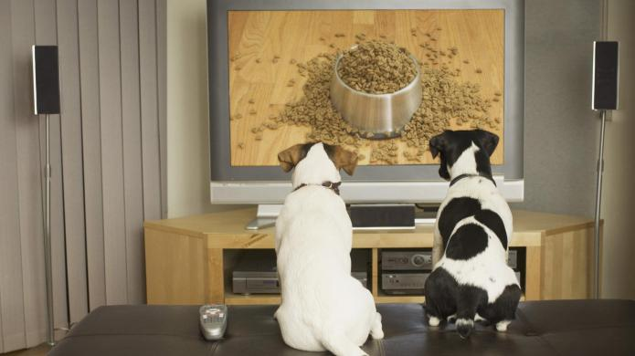 Does DOGTV actually relieve separation anxiety