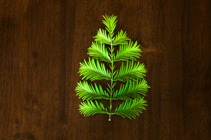 Ways to Recycle Your Christmas Tree