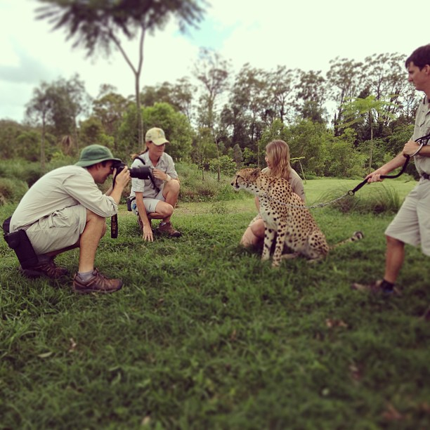 bindi-irwin-cheetah