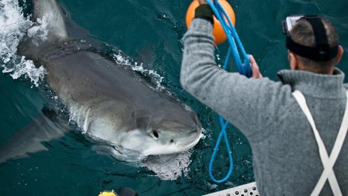 Chomp on Shark Week 2014's all-new
