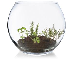 Fishbowl planter