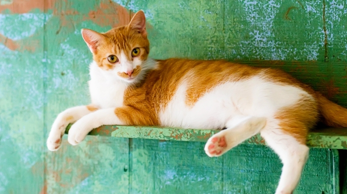 12 DIY cat condos that are