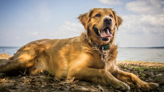 Watch out dog owners, algal blooms