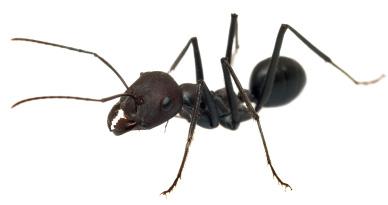 Ant farms