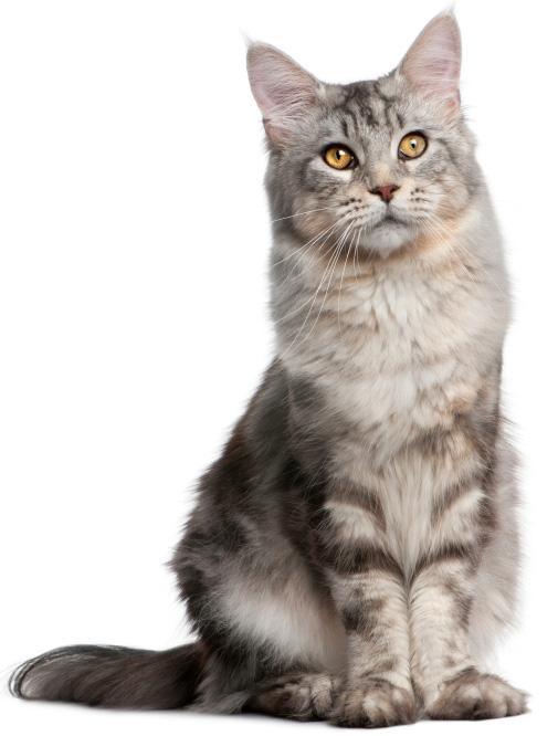 Cat | Sheknows.com