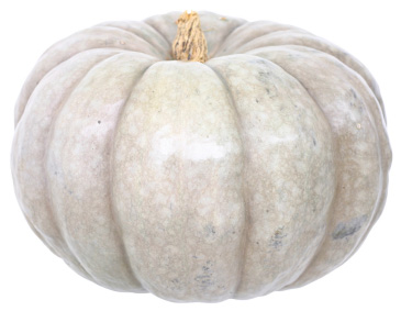 Halloween pumpkin | Sheknows.ca