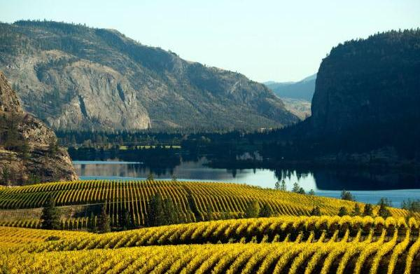 Great Canadian wineries