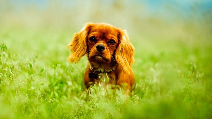 Natural Remedies for Pets Can Be