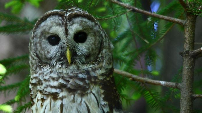 Man saves owl, drives to police