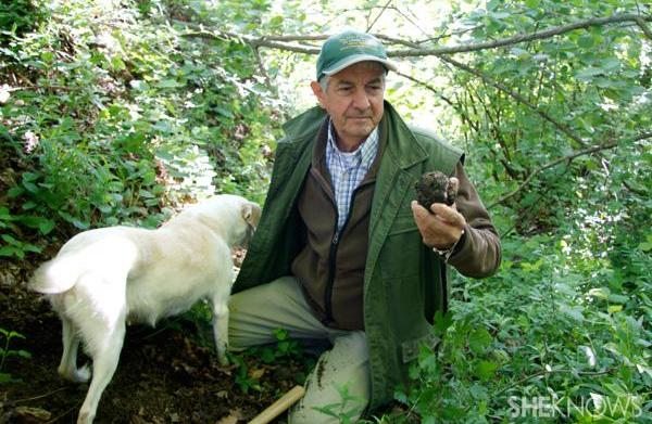 A culinary adventure: Truffle hunting in