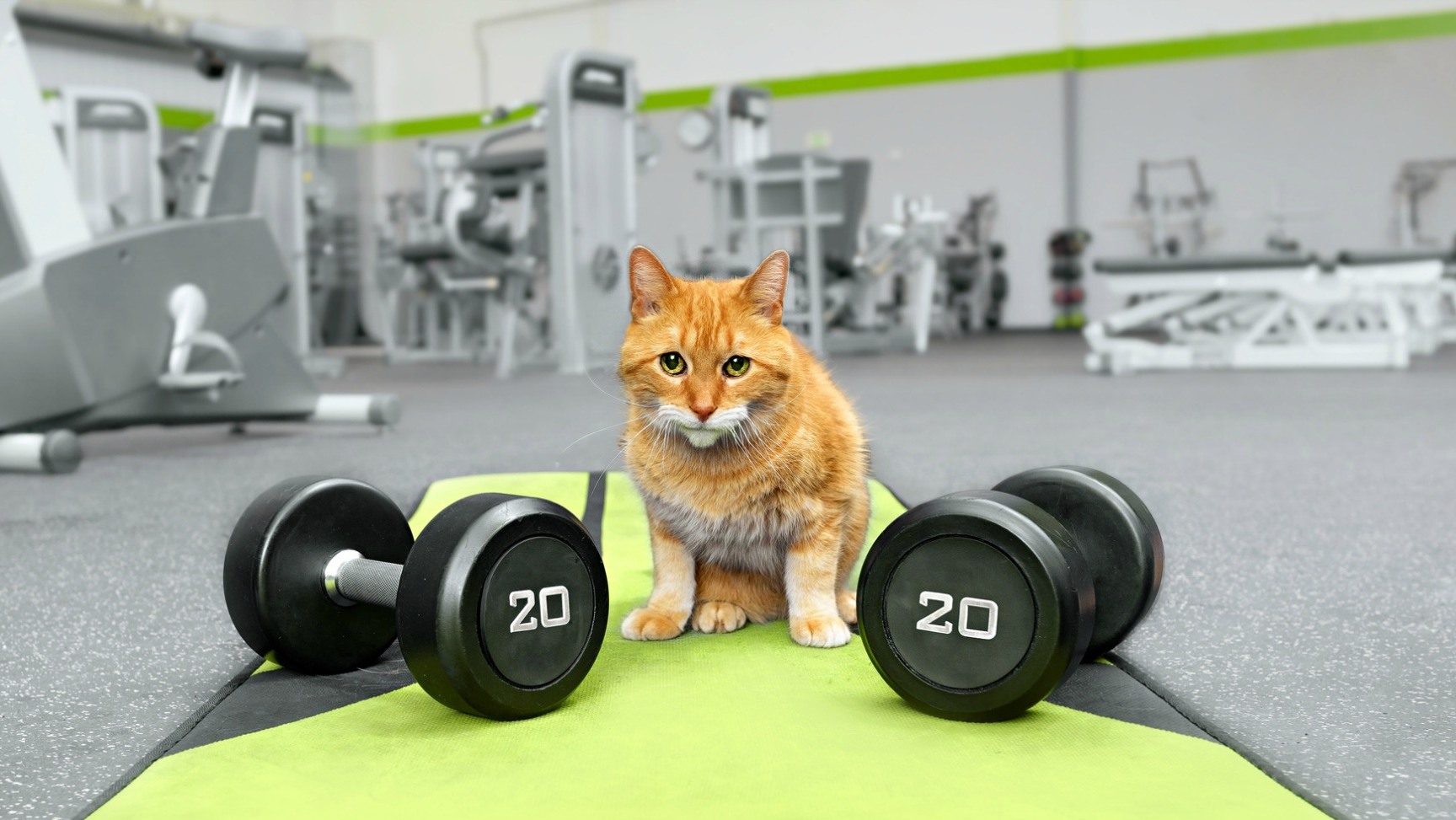 Get your indoor cat into shape