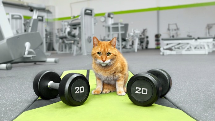 Is Your Indoor Cat Getting Fat?