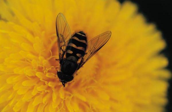Help Save the Bees!