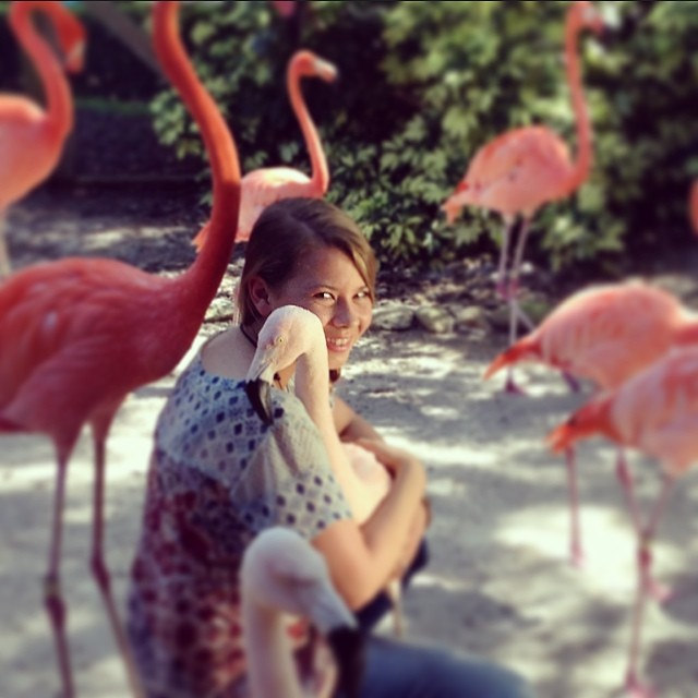 bindi-irwin-flamingos