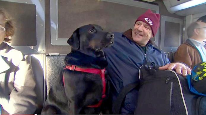 This dog rides the public bus