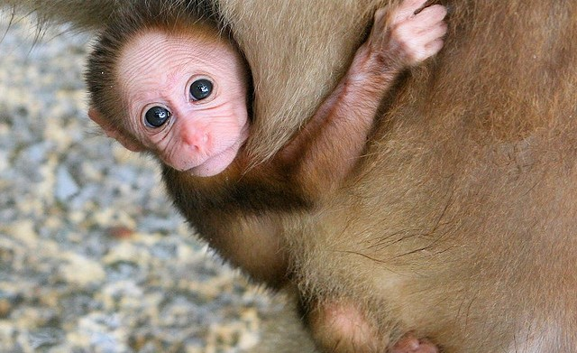 39 Cute baby animals for an