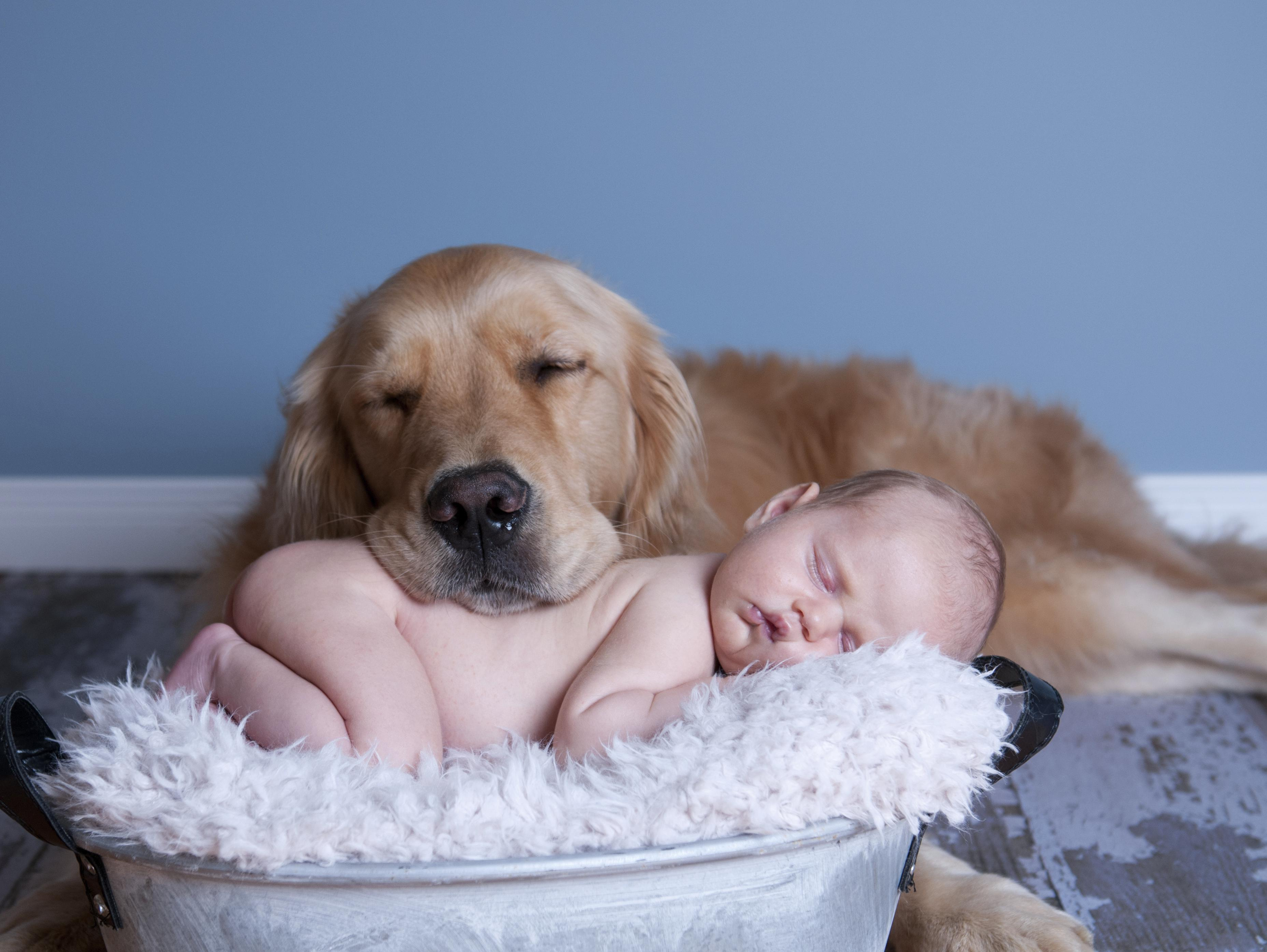 You're Not Ready For A Baby Until You Have A Dog-friendly