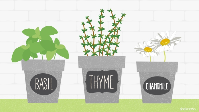 13 Awesome garden herbs that double