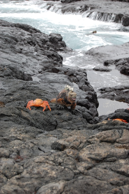 Must-See Travel Destinations: Galapagos Islands