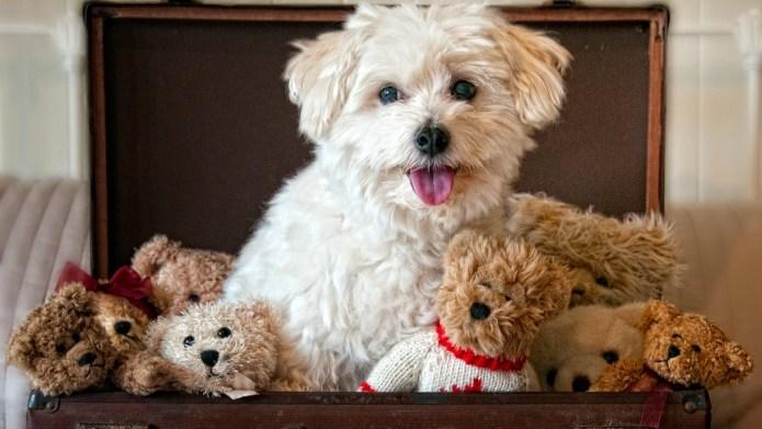 Dogs that look like bears