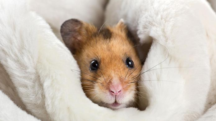 10 Funniest small animals on the