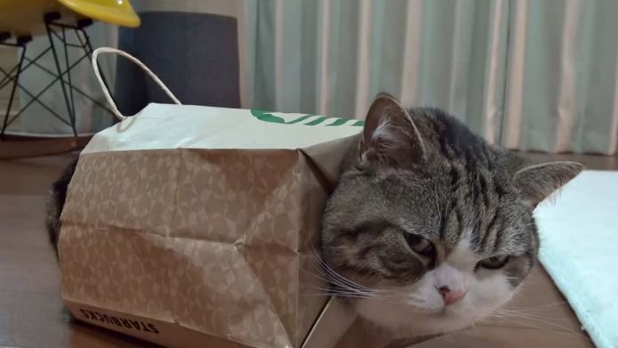 Maru cat really loves his new