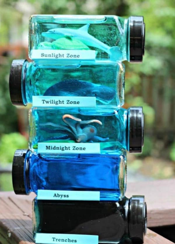 Kids Science Experiments and Projects for School: Layers of the Ocean Habitat Project