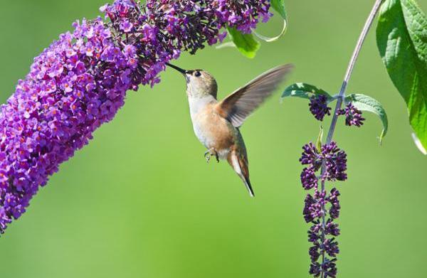 Create a garden hummingbirds will love