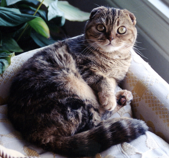 9 Exotic cat breeds every cat
