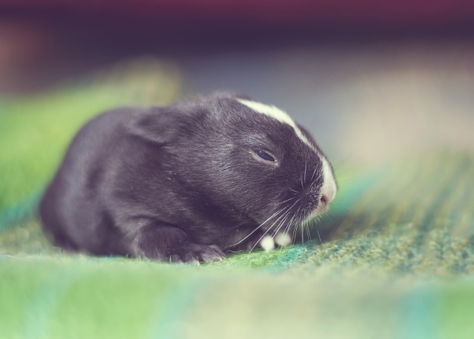 Baby bunny Day 10